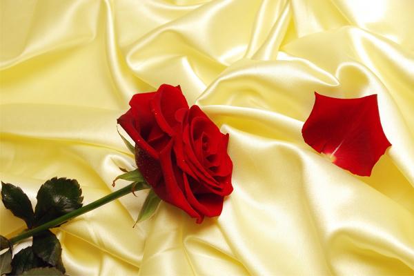 Bunga Rose - Women Online Magazine