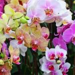 4 Cara Mudah Tanam Orkid & Penjagaannya