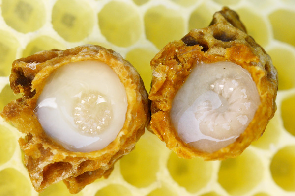 Khasiat Royal Jelly - Women Online Magazine