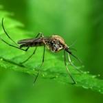 Mesti Cuba! 4 Cara Halau Nyamuk