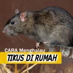7 Cara Paling Berkesan Menghalau Tikus Di Rumah!