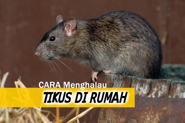 cara menghalau tikus di rumah - women online magazine