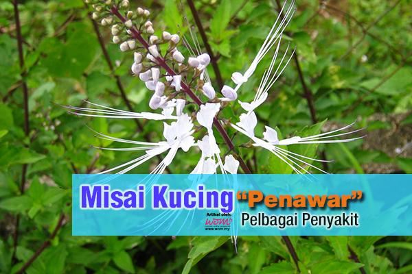 misai kucing - women online magazine