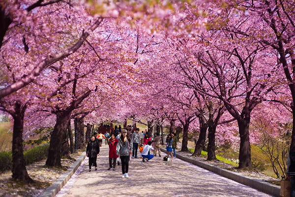 tempat menarik di korea - women online magazine