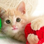 4 Bahaya Efek Bulu Kucing
