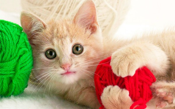 Bahaya Bulu Kucing - Women Online Magazine (1)