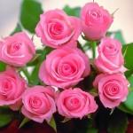 Makna Di Sebalik 9 Warna Bunga Ros Yang Patut Anda Tahu