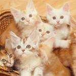 8 Kebaikan Bila Anda Bela Binatang Di Rumah