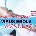 Ketahui Penyebab Virus Ebola Menular!