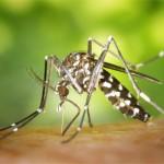 9 Petua Berkesan Untuk Halau Nyamuk Aedes