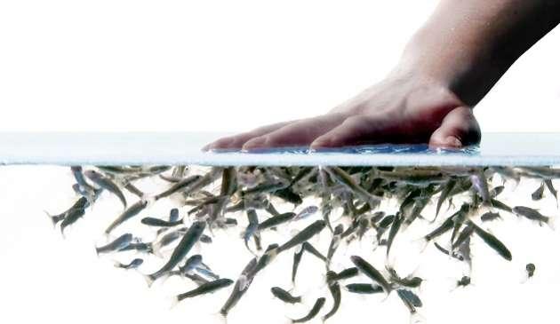 Terapi Ikan - woman online magazine