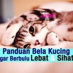 Panduan Bela Kucing Agar Berbulu Lebat & Sihat