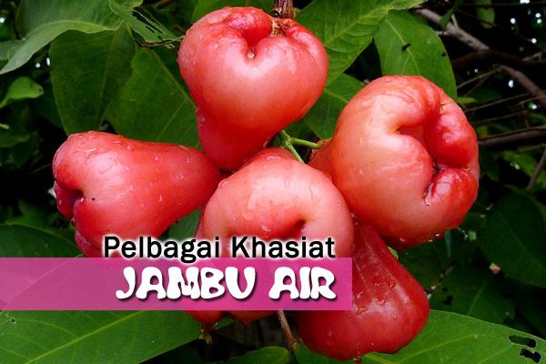khasiat jambu air - women online magazine